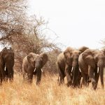 Six Best Locations To See Wildlife In Africa